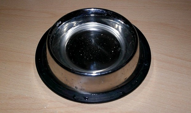 ferret food and water bowl