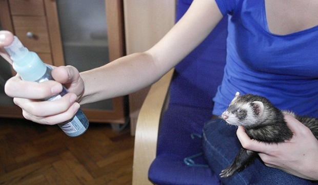 spray water training tip for ferrets