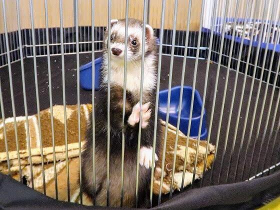 ferret with bib & mitts
