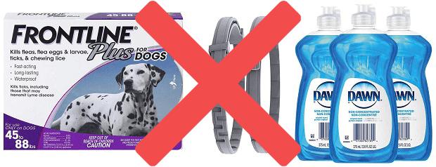 Forbidden Flea Prevention Medicines For Ferrets