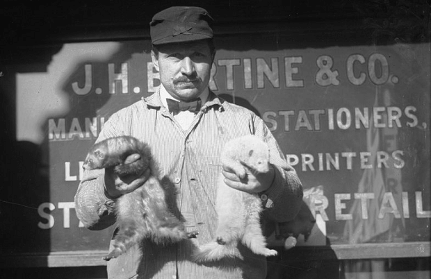 Professional Ferret Handlers ferretmeisters