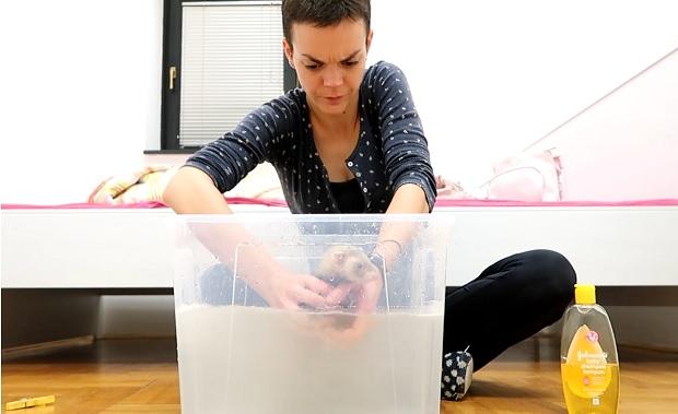 best flea treatment for ferrets