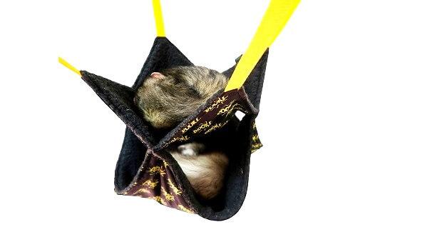 how bad do ferrets smell