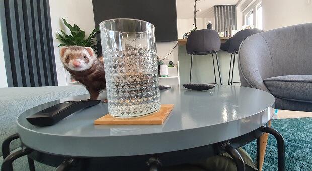 training ferrets not to bite
