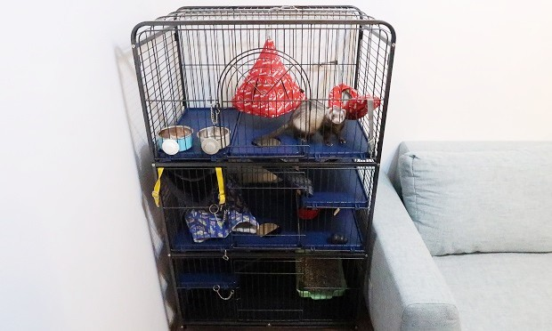 best cage for ferrets