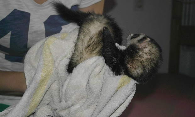 dry the ferret with a towel after bath