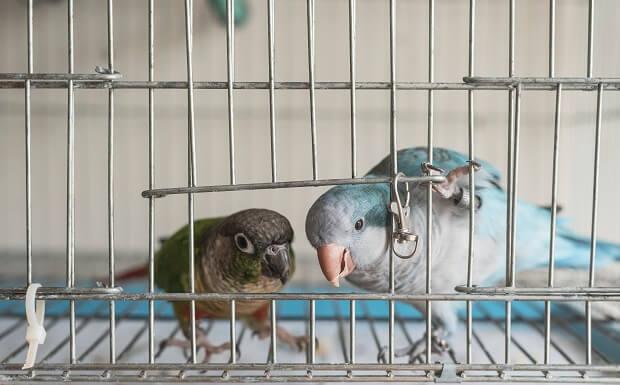 ferret bird