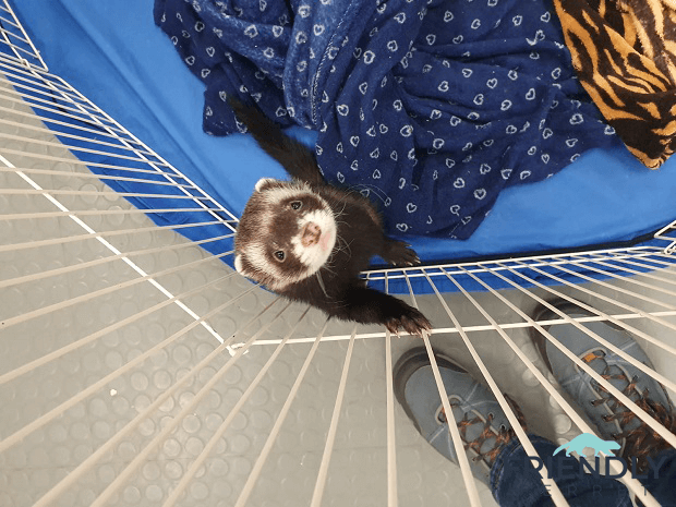 2020 Ferret Winter Wonderland In Tallinn 7