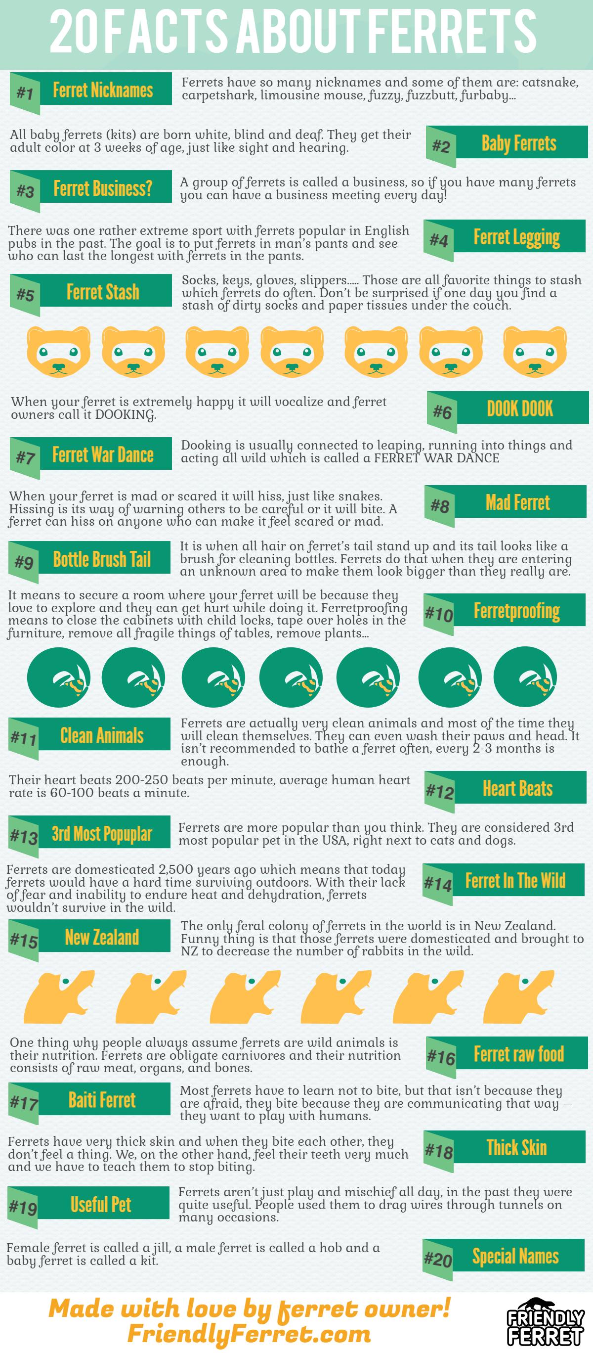 ferret facts infographics