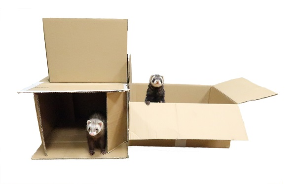shipping-friendly-ferret-worldwide