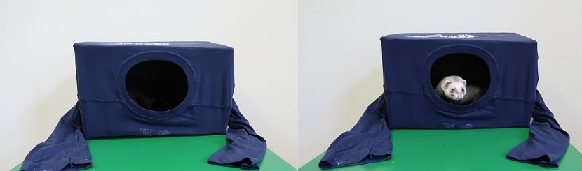 yodas-box