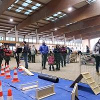 1st-International-Ferret-Show-In-Celje-Race