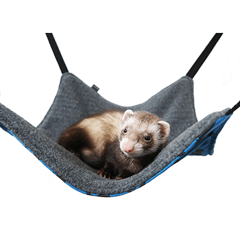Basic-Ferret-Hammock-Ferrets