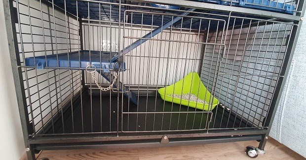 Litter Box In The Cage