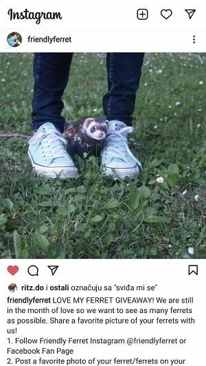 Love My Ferret Giveaway Until 28.2.2021. Instagram