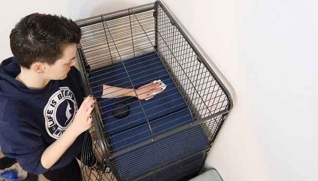 Regularly Clean The Ferret Cage