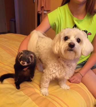 ferret and pup