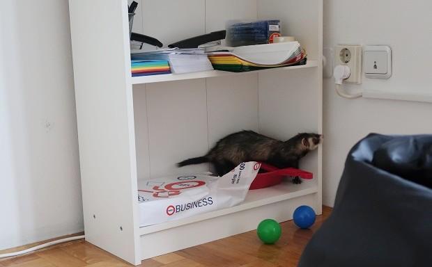 ferret proof bookshelf