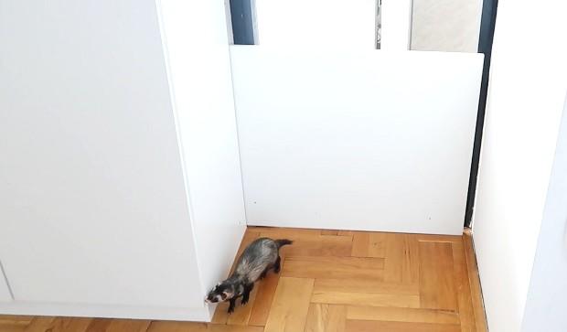 ferret proof door obstacle