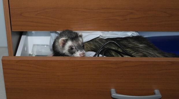 ferret proofing storage cabinets