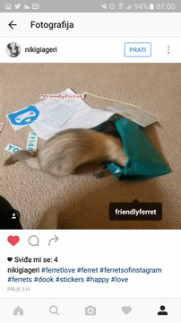 friendly ferret testimonial 12