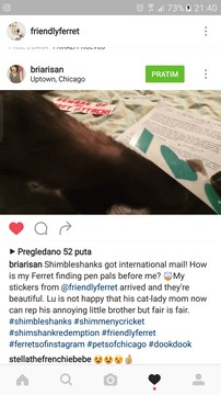 friendly ferret testimonial 14