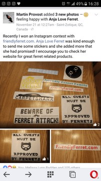 friendly ferret testimonial 27
