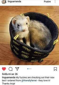 friendly ferret testimonial 40