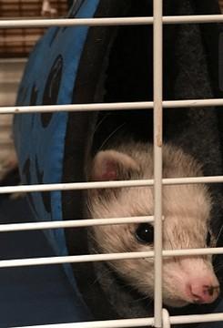 friendly ferret testimonial 41