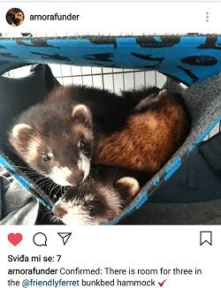 friendly ferret testimonial 46