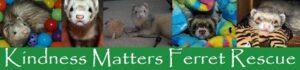 kindness matters ferret rescue