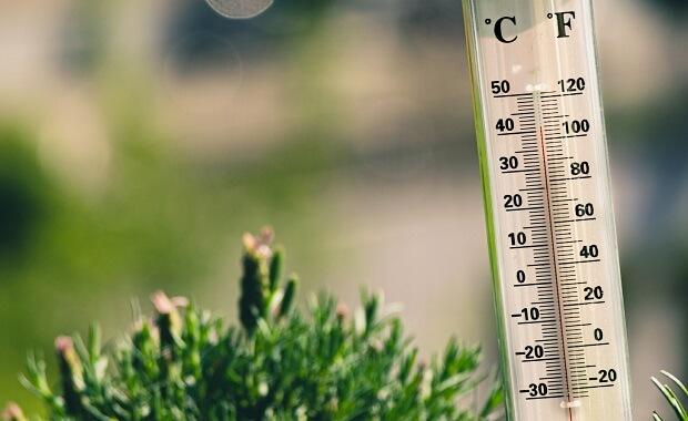 too high temperature for ferrets