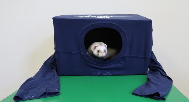 DIY Ferret Hidey Hole