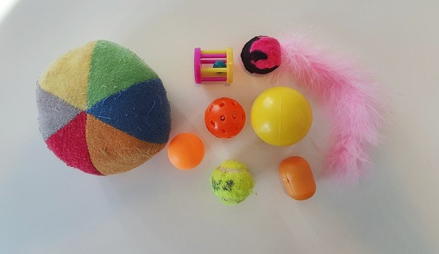 Ferret Ball Toys