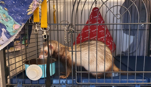 Ferret Food And Water Bowls