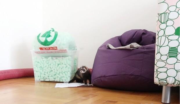 Ferrets Will Get Bored