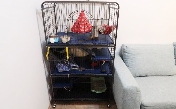 Setting Up A Ferret Cage