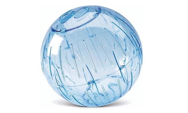 ferret exercise ball