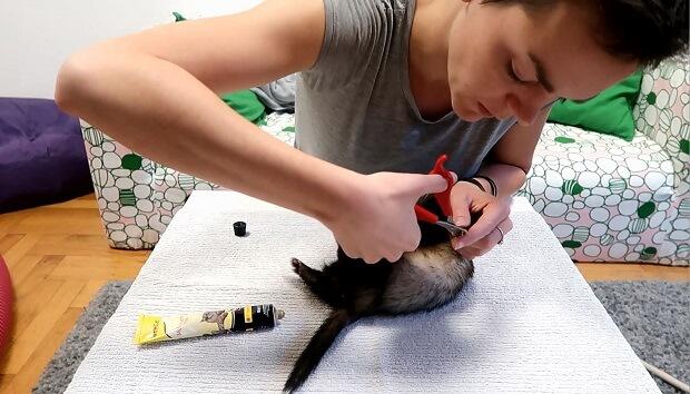 ferret grooming