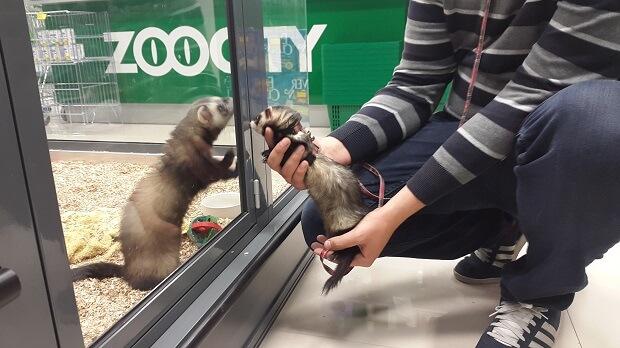 ferret stores near me