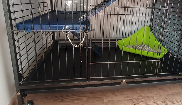 low bottom in the cage