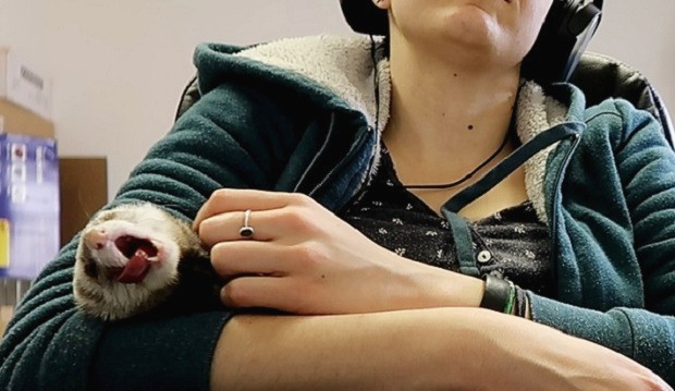 are ferrets affectionate