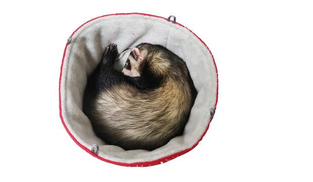 ferret hanging bed