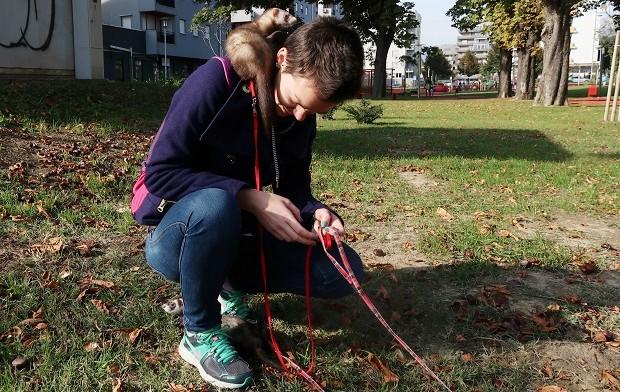 keeping ferrets as pets