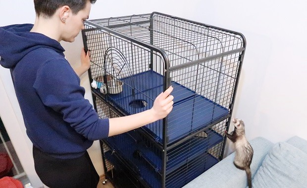 clean cage to avoid allergic reaction to ferrets