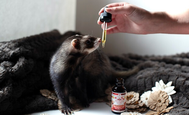 Feed Your Ferret More