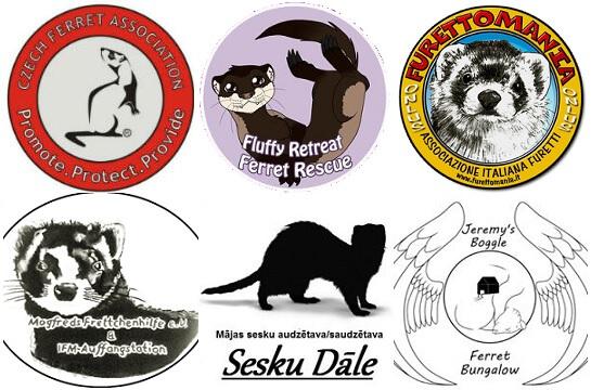 adopt cheap ferrets
