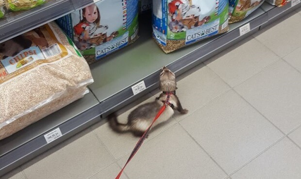 ferret for sale near me cheap