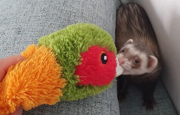safe ferret toys