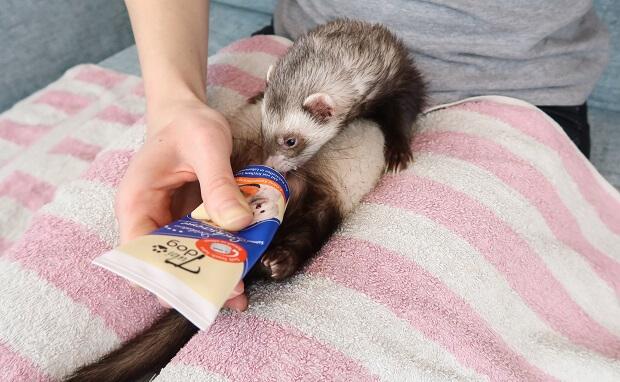 salmon paste snacks ferrets can eat